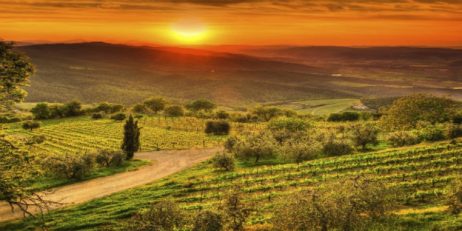 Tuscan Vineyard Villa, Dinner and Wine Tasting Experience - small group tour