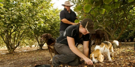 Truffle Hunting Experience with Lunch and Wine Tasting