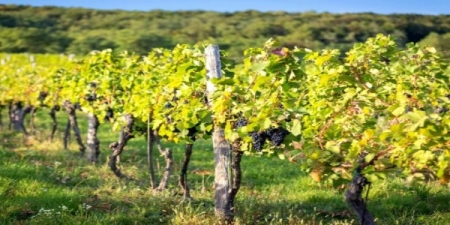 Roman Countryside Vineyard Estate Tour & Wine Tasting - small group tour