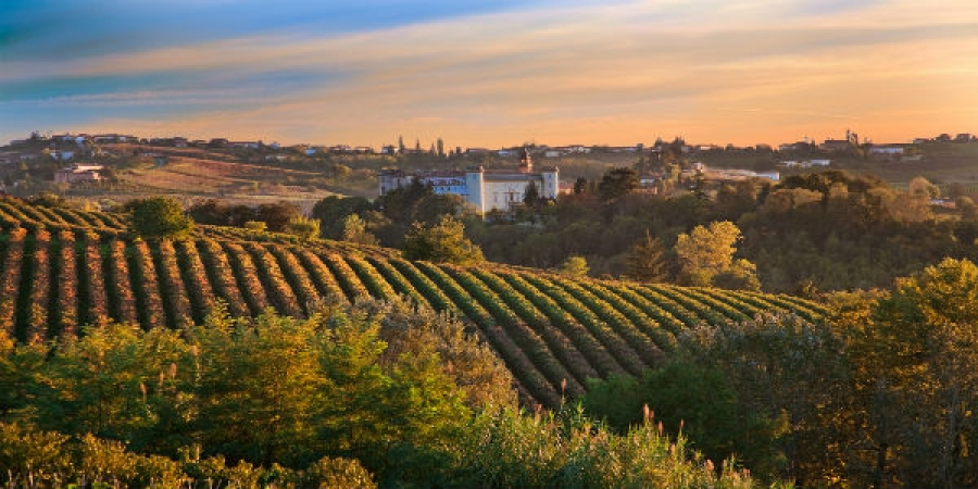 Visit the Prosecco Hills and Two Local Wine Estates - private tour, day trip from Venice with lunch