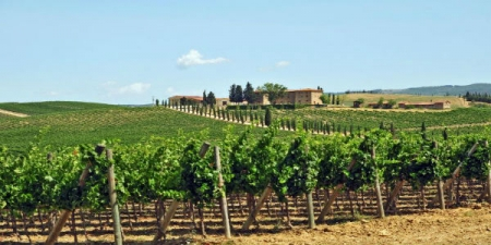 Valpolicella & Amarone Wine Tour - private tour