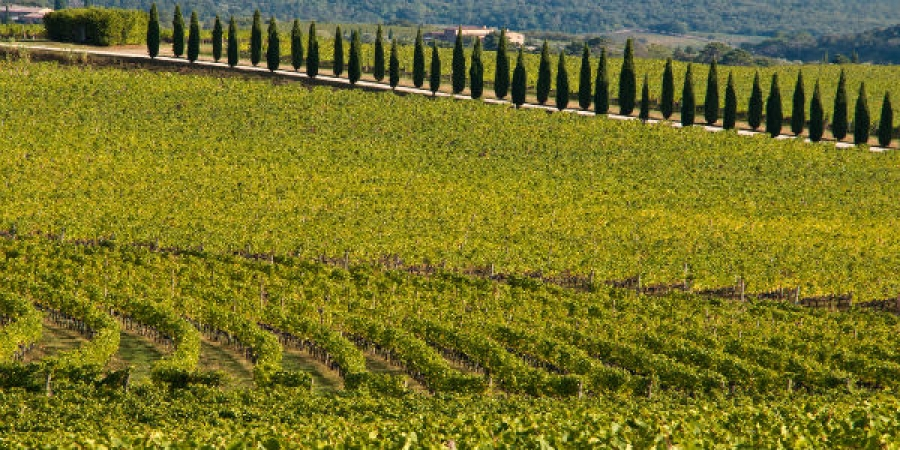 Private Tuscan Wine Tour Experience - Visit Three Wineries –  private tour