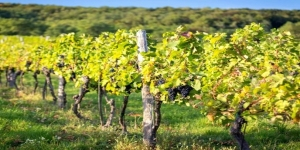 Roman Countryside Vineyard Tour & Wine Tasting - small group tour