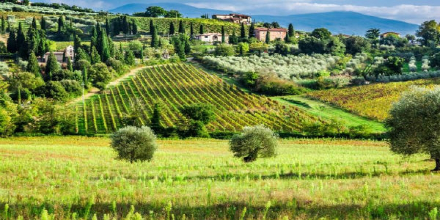 VIP Brunello Wine Tour - semi-private tour